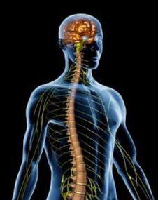 neurocirugia 2